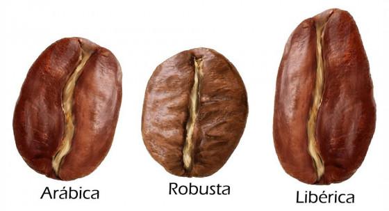 История кофе: виды и сорта, разновидности кофе.